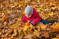Boy played with autumn leaves Royalty Free Stock Photo