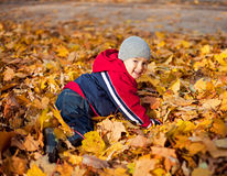 Boy played with autumn leaves Stock Photo