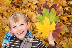 Boy playing with Autumn leaves Stock Photo