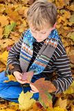 Boy playing in Autumn leaves Royalty Free Stock Photos