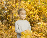 Boy playing with autumn leaves Royalty Free Stock Image