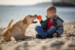 Close up portrait of young boy playing ball with his dog on the beach stock images
