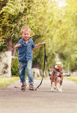 Boy playing with beagle puppy Royalty Free Stock Photography