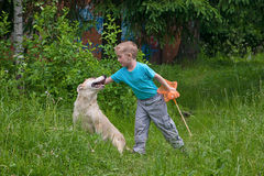 Boy playing with dog Stock Images