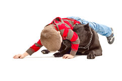 Boy playing with the dog. Little boy playing with the dog breed Staffordshire Terrier Stock Image