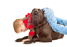 Boy playing with the dog. Beautiful boy playing with the dog breed Staffordshire Terrier stock photo