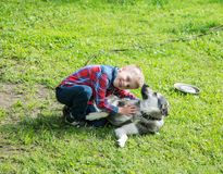 Boy playing with a dog on a summer day Stock Images