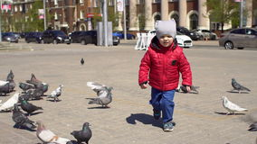 Boy playing with doves birds in city park. Child running aroud pigeons, slow motion stock video footage