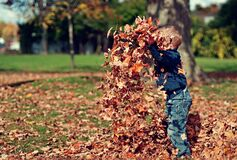 Boy Playing With Fall Leaves Outdoors Royalty Free Stock Image