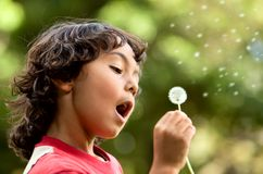 Boy playing with a flower Royalty Free Stock Image