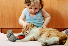 Boy playing with ginger cat house. stock photo
