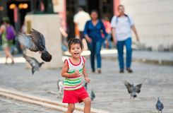 Boy playing in havana park with pigeons royalty free stock photo
