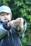 Boy playing with hedgehog Royalty Free Stock Photography