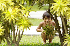 Boy playing hide and seek Royalty Free Stock Photo