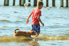 Boy playing with his dog. Stock Photography