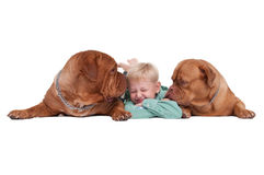Boy playing with his dogs Royalty Free Stock Photography