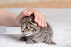 Boy playing with kitten at home Royalty Free Stock Photo