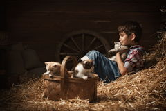 Boy playing with kittens in the barn Royalty Free Stock Photos