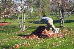 Boy Playing in the Leaves. Boy diving into a pile of leaves in a back yard Stock Photography