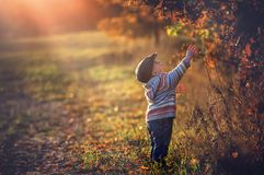 Boy playing outdoor in autumn scenery. Stock Photos