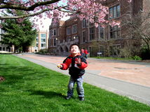 Boy playing outside. Young boy playing outside on the grass under a pink flowering cherry tree Stock Images