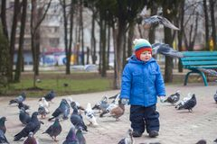 Boy playing with pigeons doves birds in city park.  stock photo