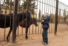 Boy playing with ponies Stock Photo