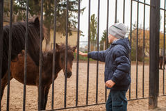 Boy playing with ponies Stock Photography