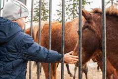 Boy playing with ponies Stock Image