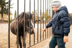 Boy playing with ponies Royalty Free Stock Image