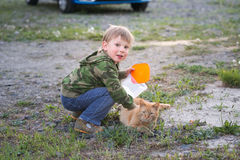 The boy is playing with a red cat. Royalty Free Stock Image
