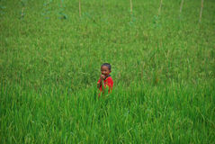 Boy playing in rice fields in Indonesia Royalty Free Stock Photography