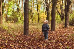 Little boy walking in autumn forest. Boy playing with a stich as a knight or warrior or primitive human in autumn forest. Blonde boy stand near the tree Stock Photography