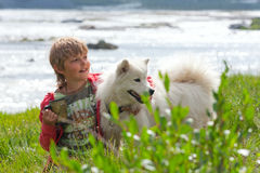 A boy plays with a dog  husky Stock Image