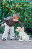 Boy plays with a dog breed Labrador Stock Images