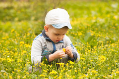 Boy plays with flowers Royalty Free Stock Photo