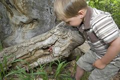 Boy plays in hollow tree Royalty Free Stock Images