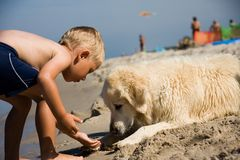 Boy Plays With Dog On Beach Royalty Free Stock Photos
