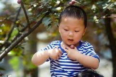 Boy plucking plums. Stock Photos