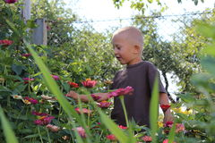 Boy plucks flowers Stock Image