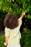 Boy pointing out nature. Two year old boy pointing at something beyond the green leaves Royalty Free Stock Photography