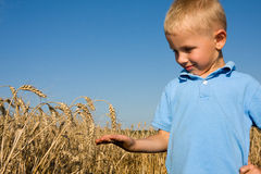 Boy pointing wheat ear Stock Photography