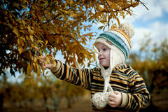 Boy in pomegranate grove Stock Images