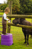 Boy and Pony. A four year old boy feeding a pony with some animal feed on a farm Royalty Free Stock Photo