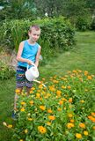 Boy pouring flowers. Boy pouring orange flowers with watering pot Stock Image