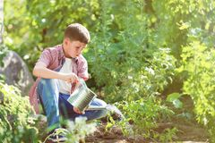 Boy pouring green plant royalty free stock images