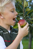 Boy (7-9) preparing to bite apple on tree, close-up Royalty Free Stock Photos
