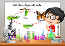 Boy presenting life cycle of butterfly Royalty Free Stock Photos