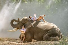 Boy primary school student In the countryside of Thailand Lying down reading a book on the back of an elephant,Surin,Thailand