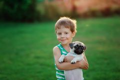Boy and pug. On a lawn play the child with a puppy of a pug Royalty Free Stock Images